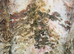 Wie mit den Parasiten im Darmkanal zu kämpfen