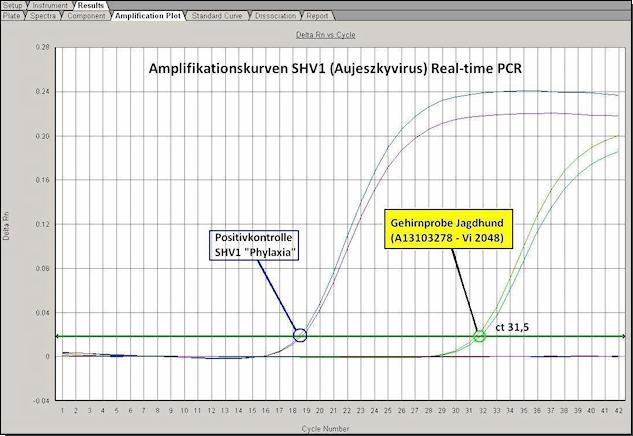 SHV1-qPCR_Amplifikationskurve