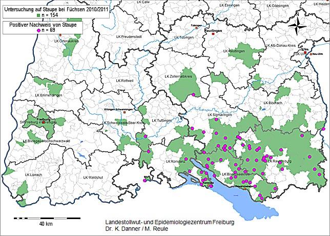 Geografische Verbreitung der Staupefälle
