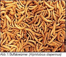 Buffalowürmer (Alphitobius diaperinus)