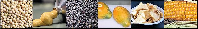 GVO Lebensmittelproben