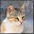 Katze (Foto: © CVUA Freiburg)