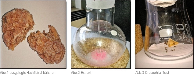 Köder, Probenextrakt, Drosophila-Test