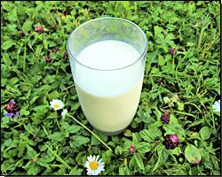 Ein Glas Milch im Gras