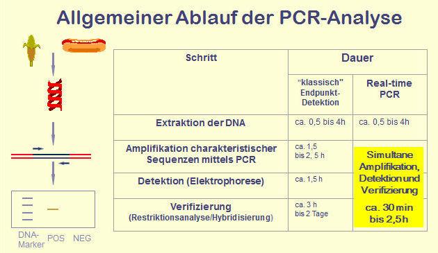 PCR-Analyse, allgemeiner Ablauf