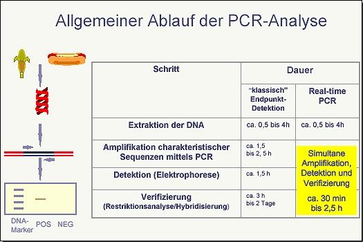 Allgemeiner Ablauf der PCR-Analyse