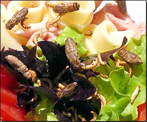 Salat mit Insekten