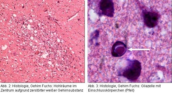Abb. 2 + 3: Histologische Untersuchung