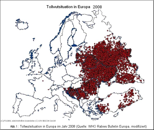 Tollwutsituation in Europa im Jahr 2008 (Quelle: WHO Rabies Bulletin Europa, modifiziert)
