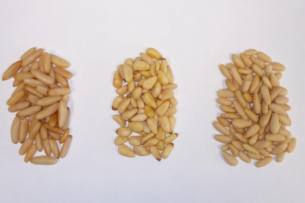 Drei unterschiedliche Pinienkernarten