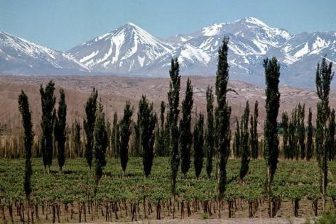 Weinberge Mendoza, Argentinien