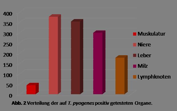 Verteilung der auf T. pyrogenes positiv getesteten Organe
