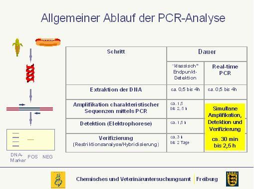 Grafik: schematische Darstellung einer PCR-Analyse.
