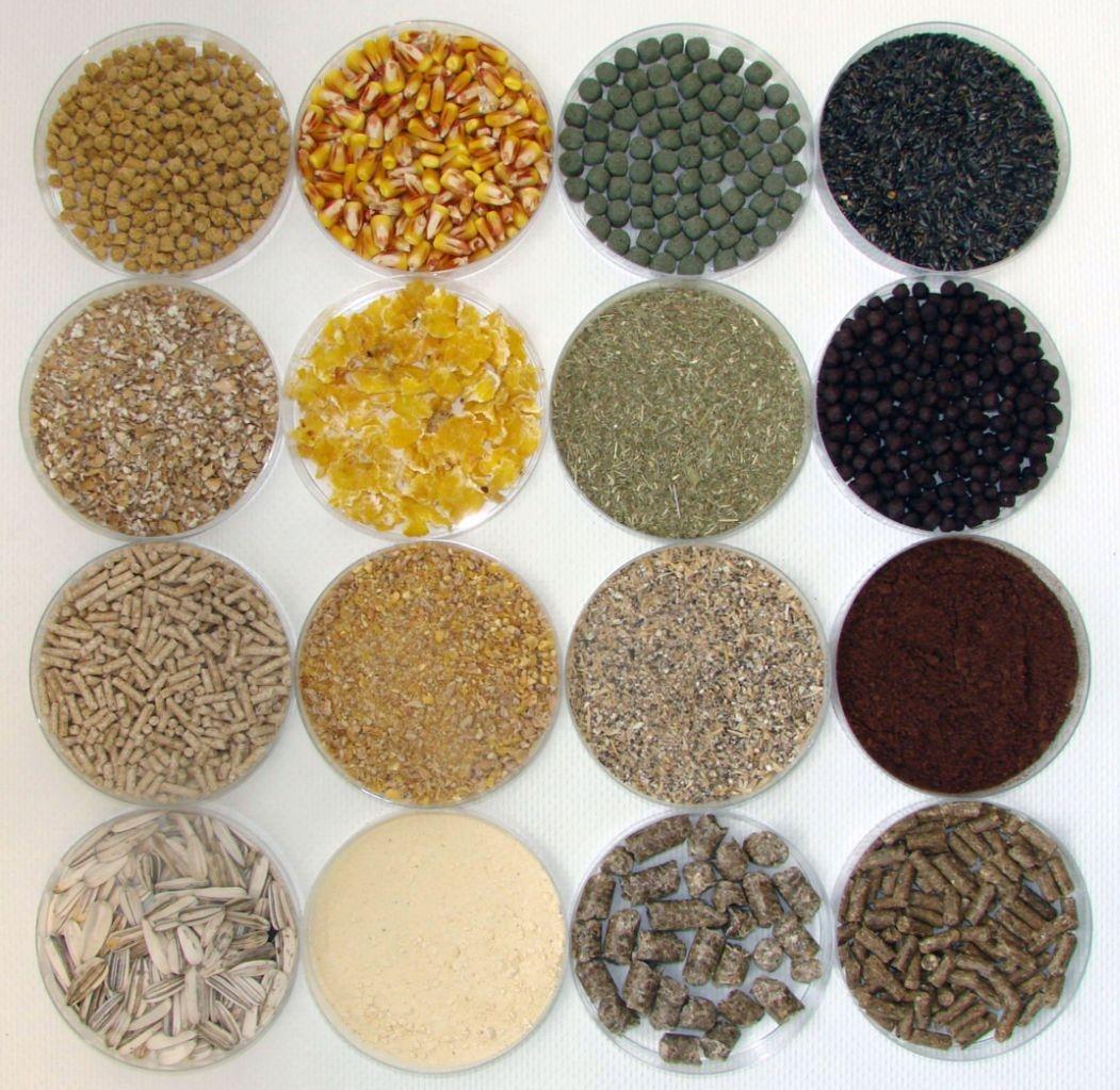 Abbildung von Futtermittelproben.