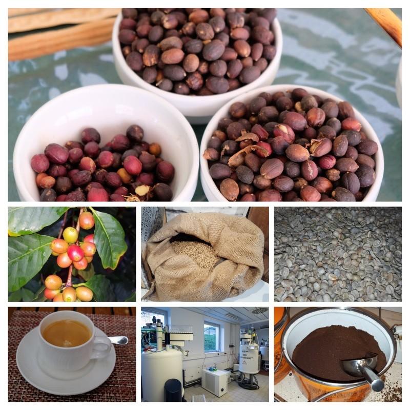 Eine Kollage von mehreren Bilder zeigt Kaffeekirschen an der Pflanze und nach der Ernte, rohe Kaffeebohnen sowie geröstetes und gemahlenes Kaffeepulver. Im unteren Bildteil sind die NMR-Spektrometer zu sehen, mit denen die Analysen durchgeführt wurden, sowie eine fertig zubereitete Tasse Kaffee.
