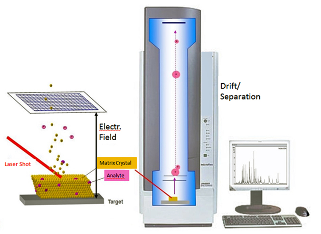 mass spectrometer design report 2 Mass spectrometry mass spectrometry (ms) is an analytical technique for the determination of the elemental composition of a sample or molecule it is also used for elucidating the chemical structures of molecules, such as peptides and other chemical compounds.